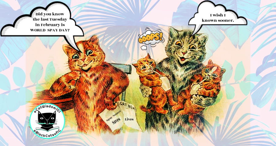 mom_dad_kittens_spayday_catwisdom101 Why Spay/Neuter or Desex Cats on World Spay Day