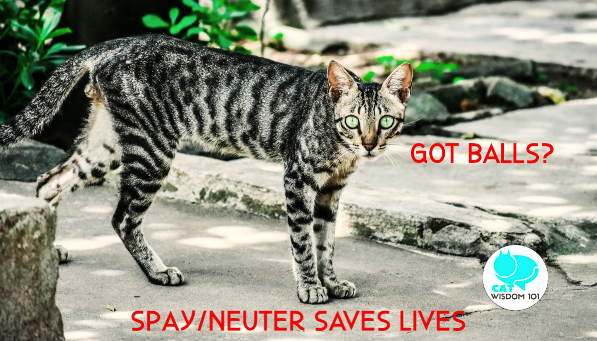 neuter_feral__spayday_catwisdom101 Why Spay/Neuter or Desex Cats on World Spay Day