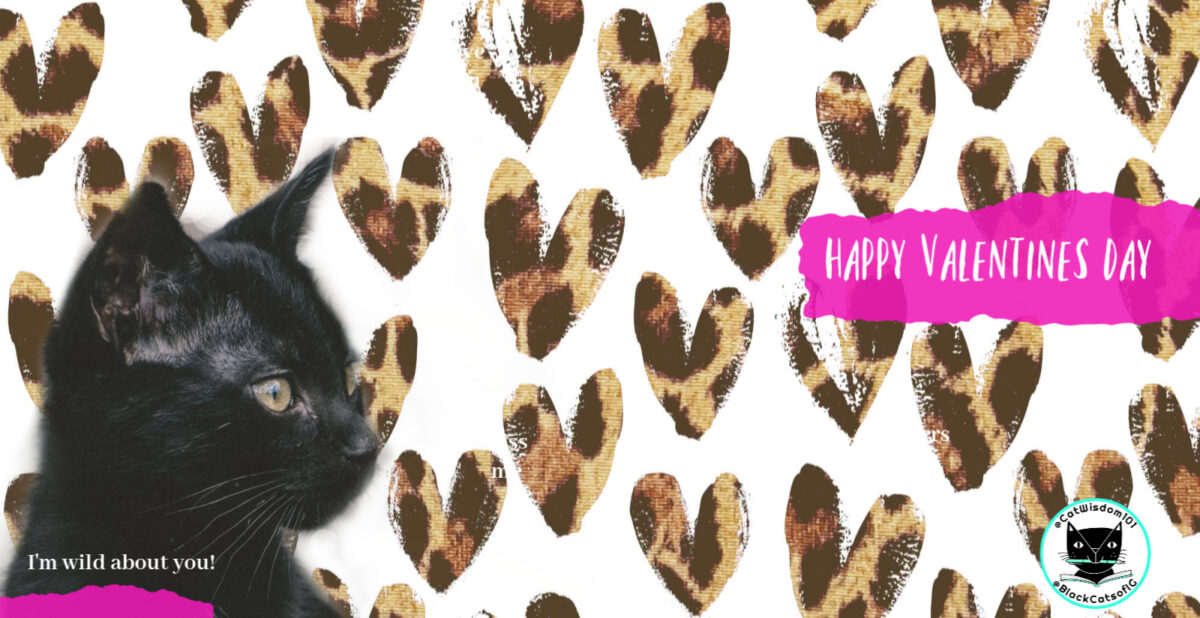 Valentine Video Purrs of True Kitty Love