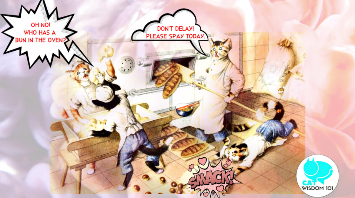 spay_neuter_cats_catwisdom101_cartoon Why Spay/Neuter or Desex Cats on World Spay Day