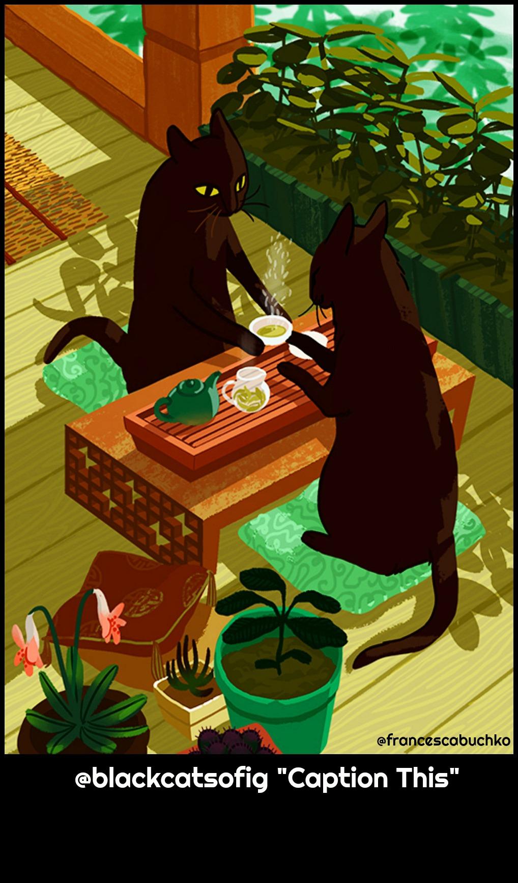 tea-black_cats-francesca-buchko