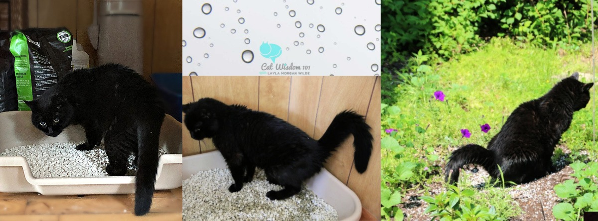 clyde-black-cat-big-litter box