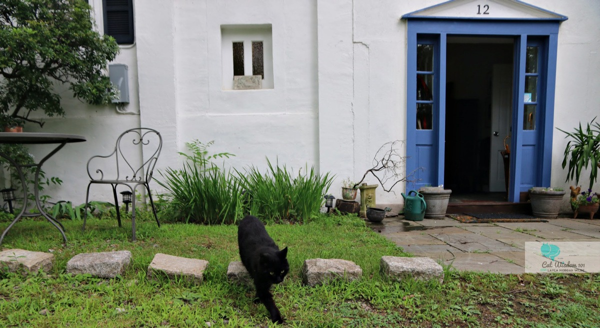 black cat clyde outside his home