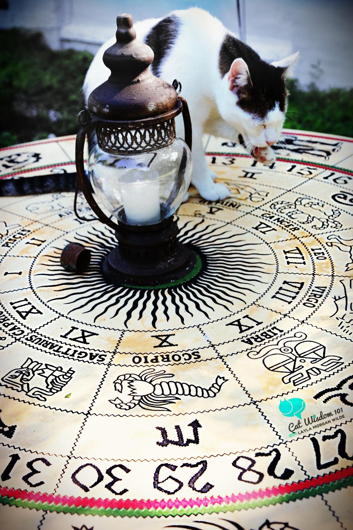 odin-gemini-zodiac-cat-astrology
