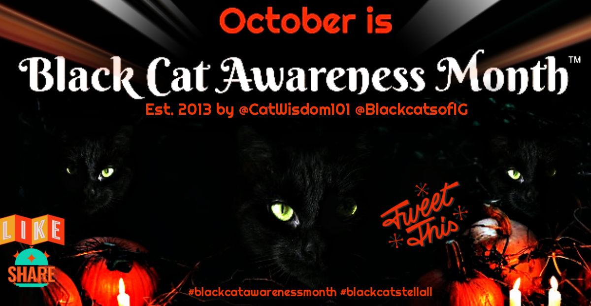 black cat awareness month