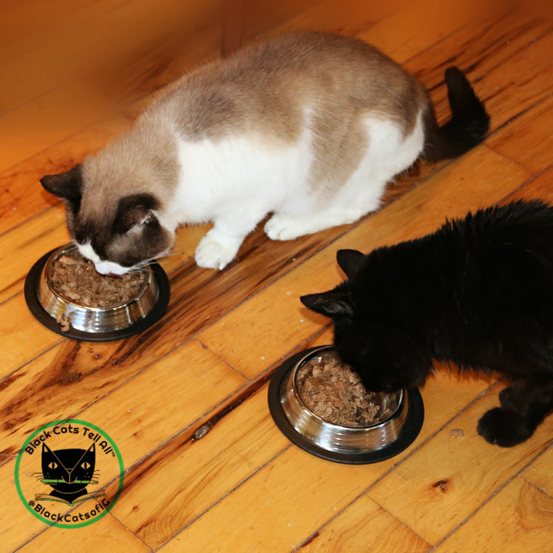 cats dining