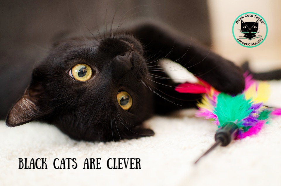 black cat-toy-clever
