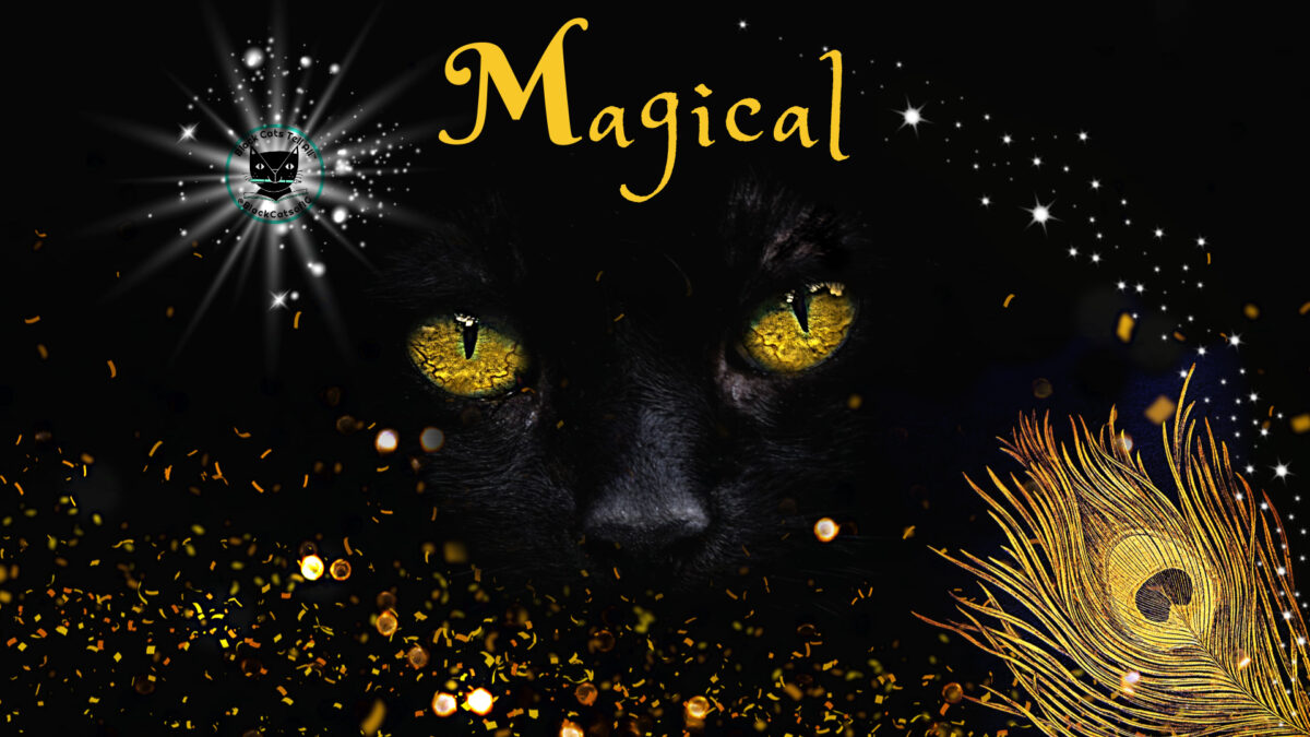 black cat_magical