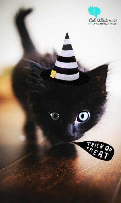black-kitten_trick or treat