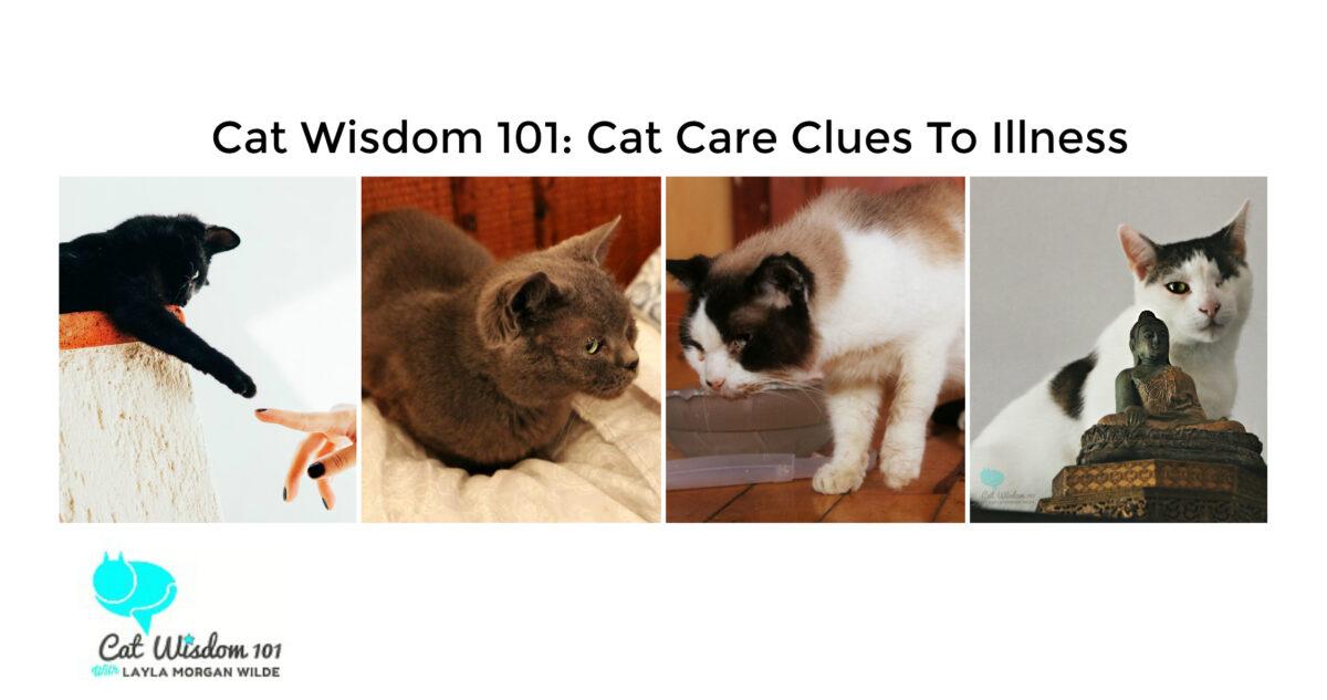 cat care clues to hidden illness: catwisdom101