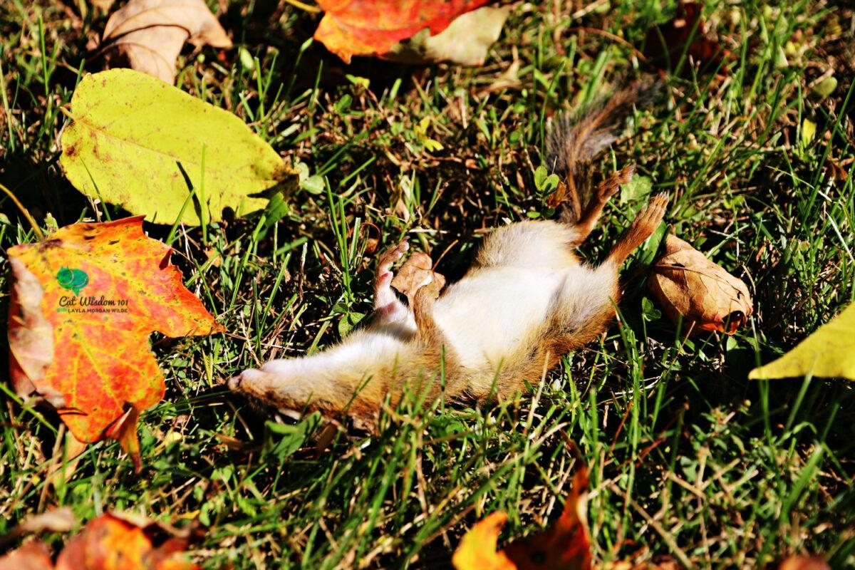 dead chipmunk