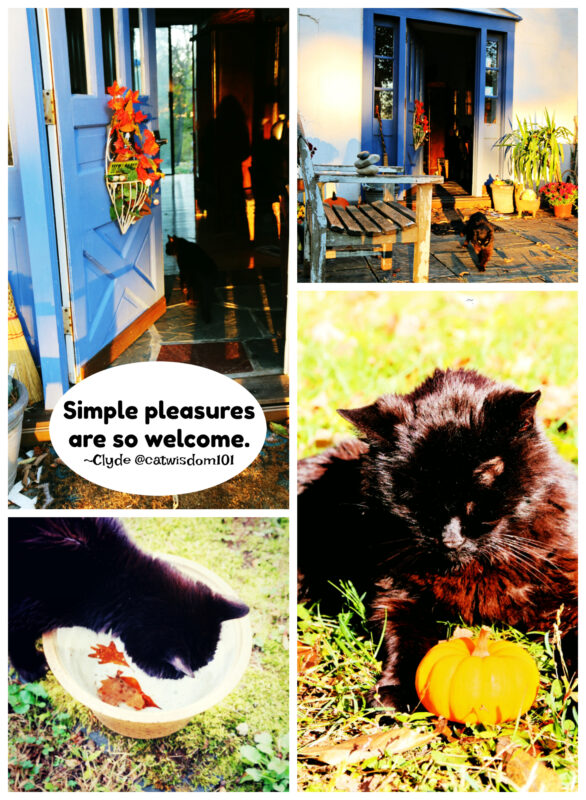 clyde-cat-autumn-pleasures