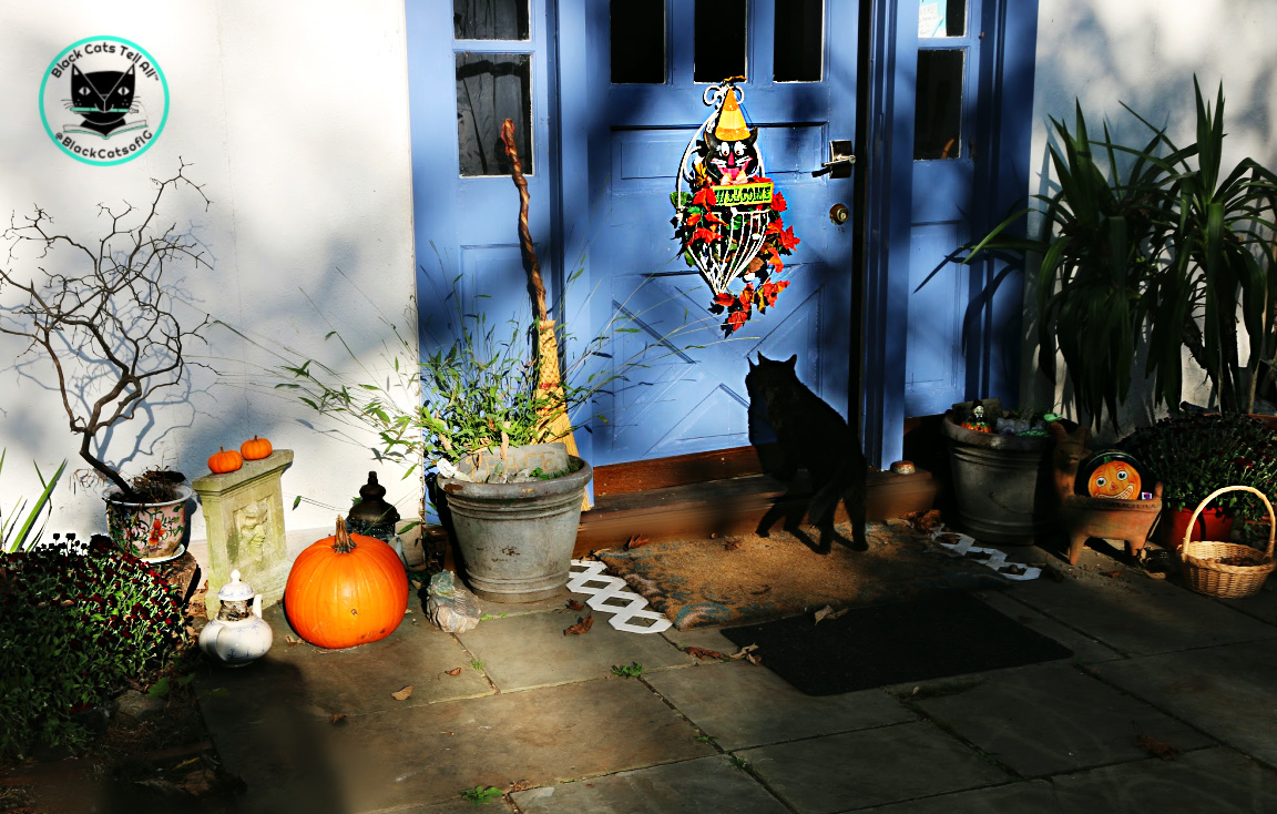 black cat going inside door with pumpkins