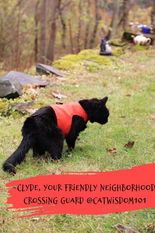 clyde-halloween-costume-cat
