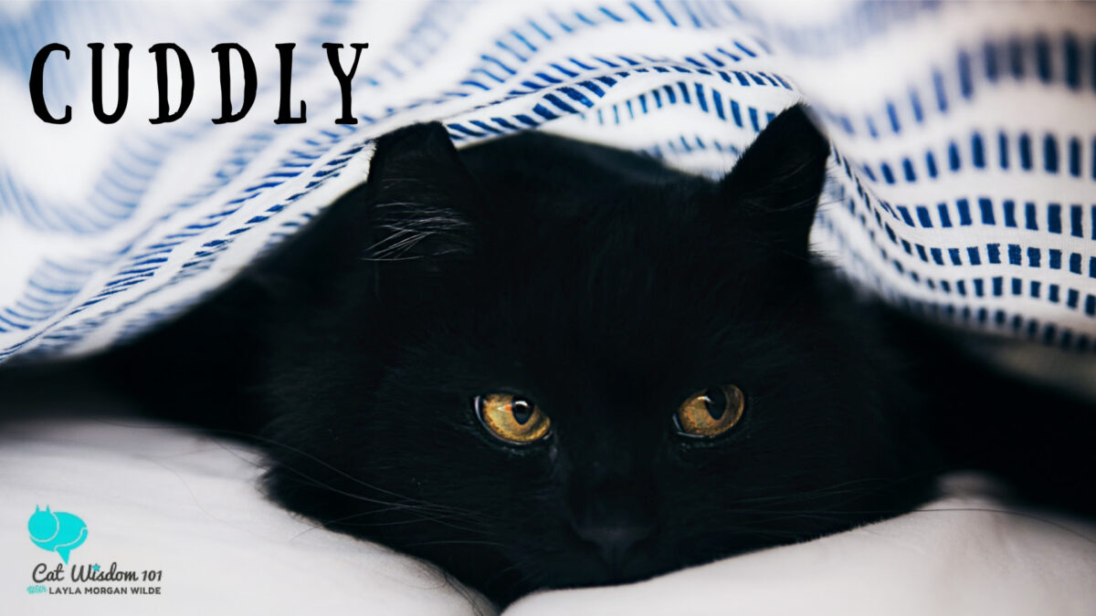 cuddly-black cat