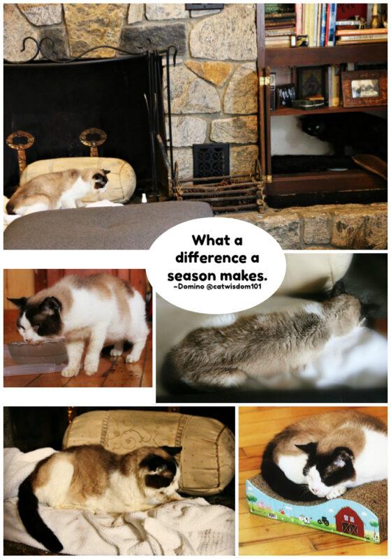 domino-cat-cancer-loss