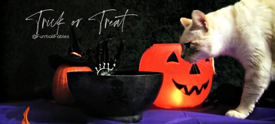 furballfables-halloween-cat special show