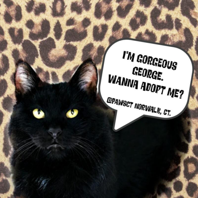 george-black cat