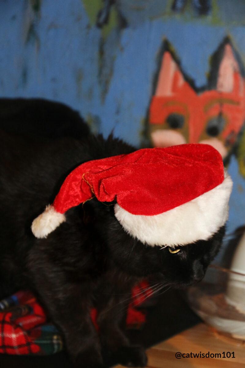 black cat Clyde wearing Santa hat