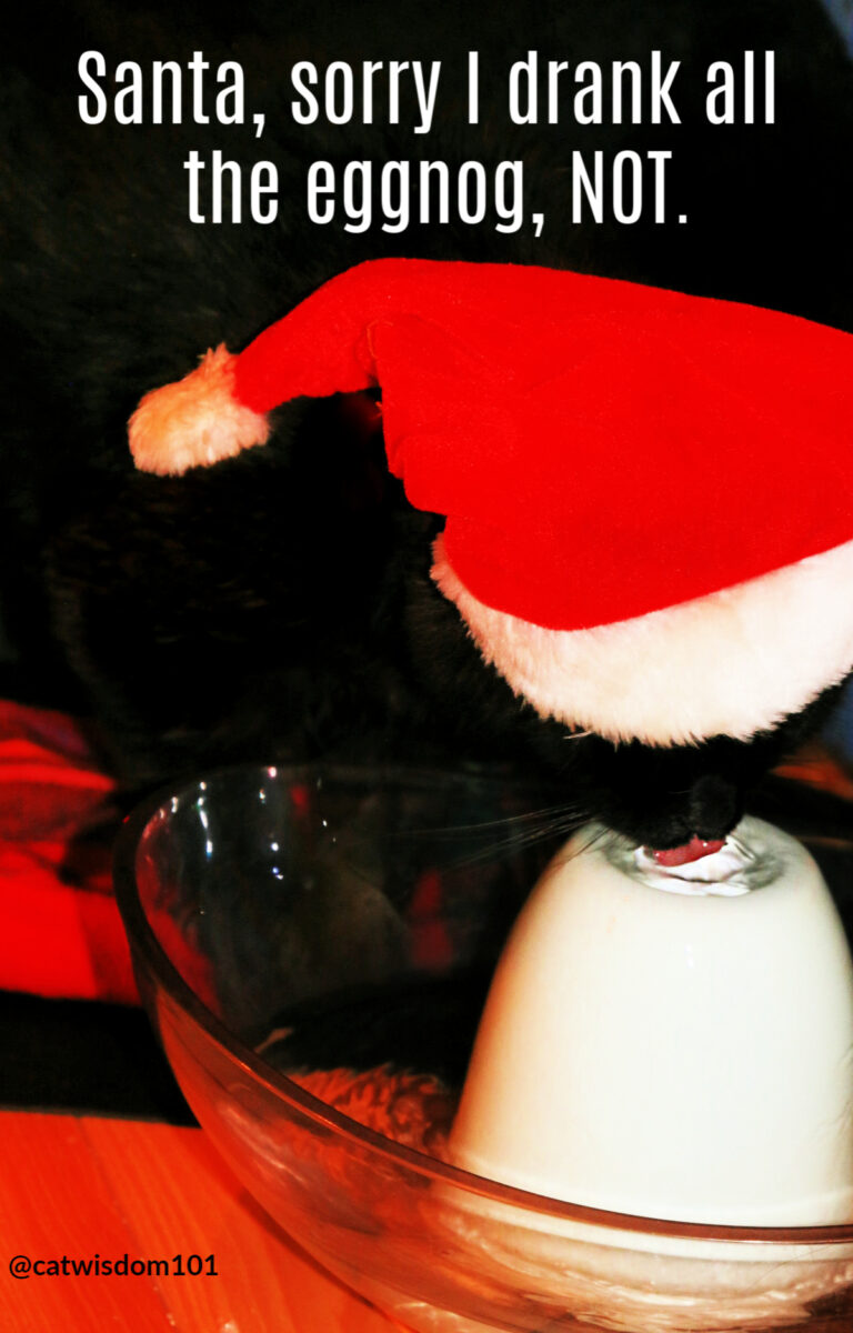 black cat santa hat drinking water fountain