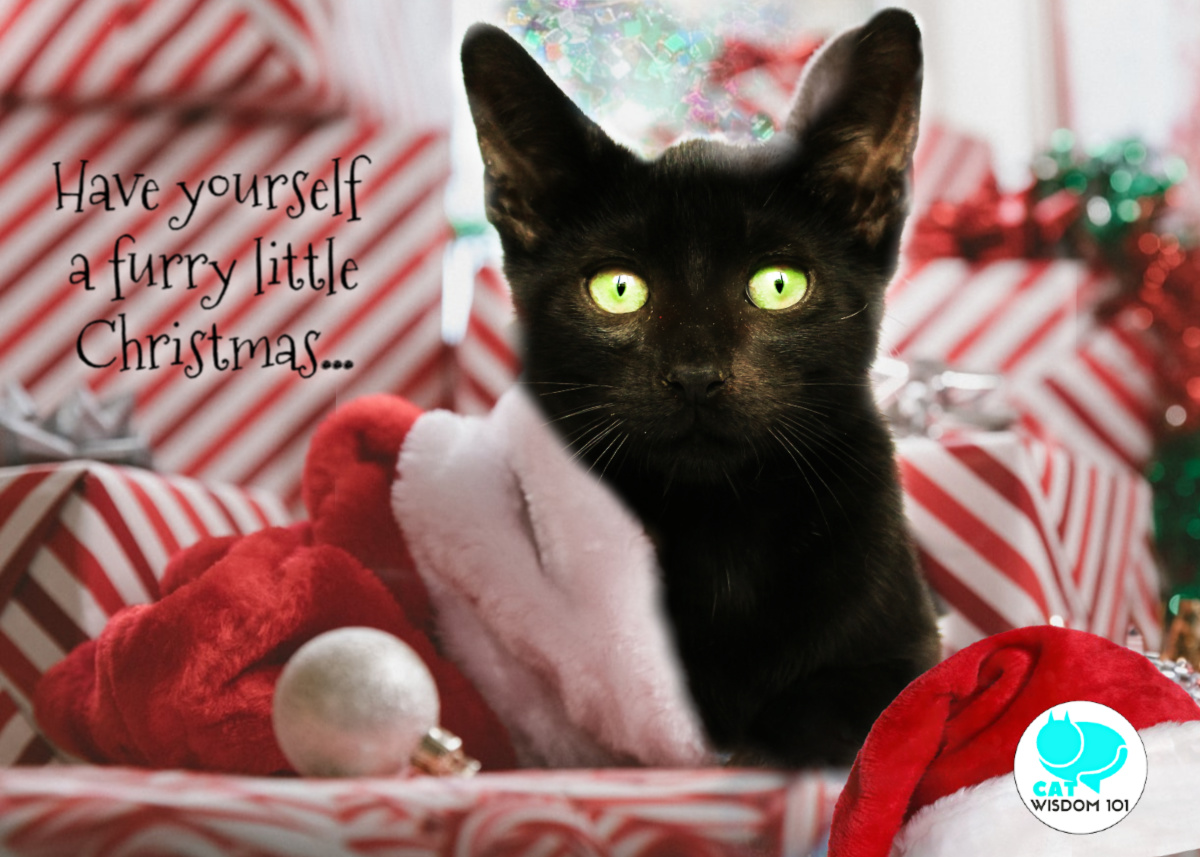 black cat furry little christmas