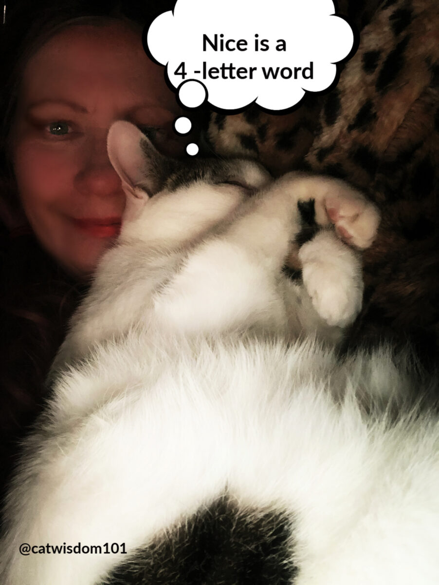 Odin and cat wisdom 101 mom Layla
