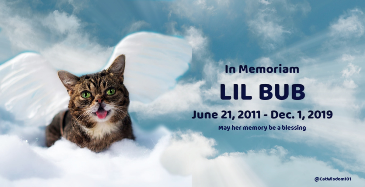 RIP Lil Bub in heaven