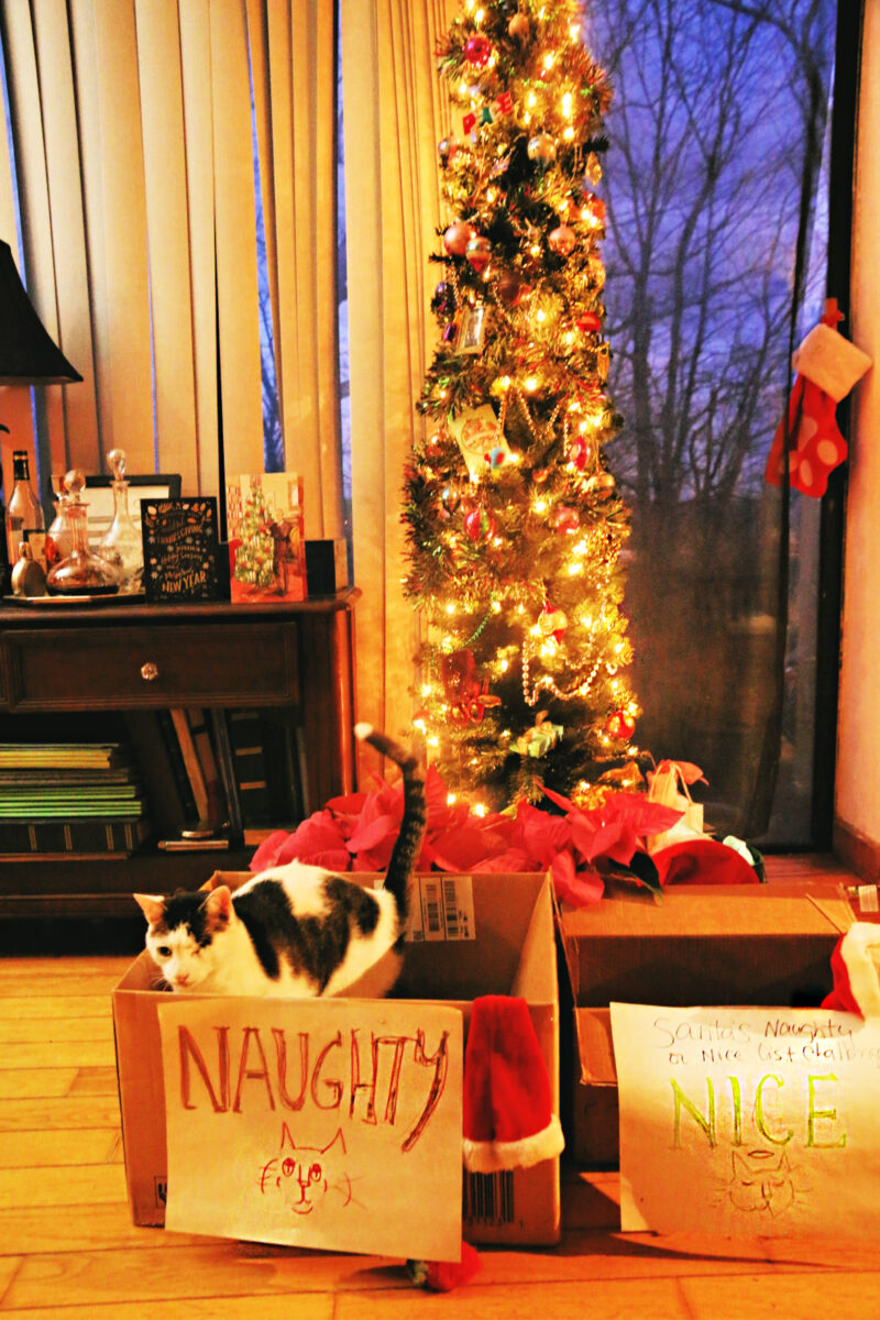Odin Naughty Christmas box cat