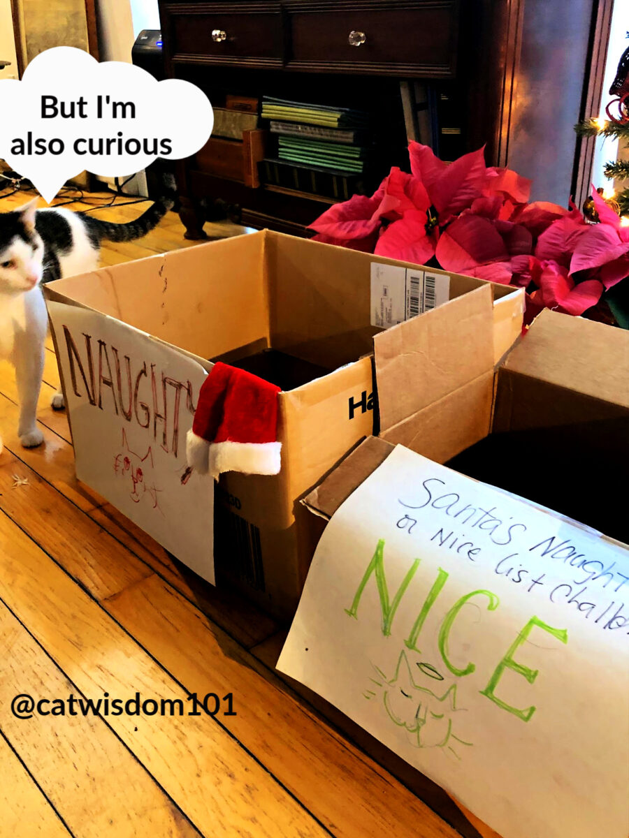 Odin cat with naught or nice boxes