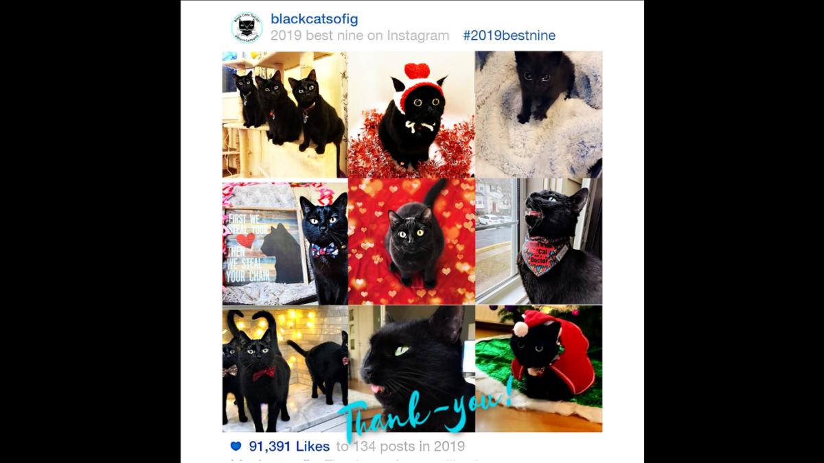 best nine 2019 instagram black cats