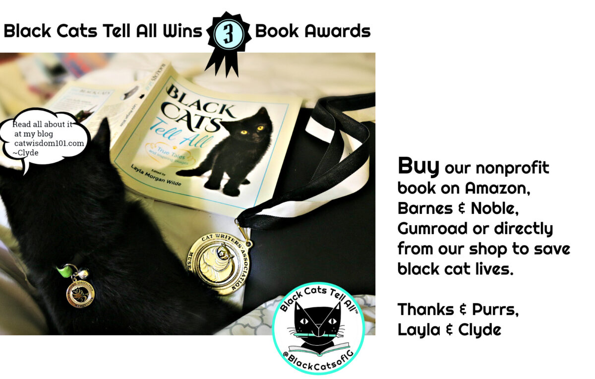 award winning black cat book