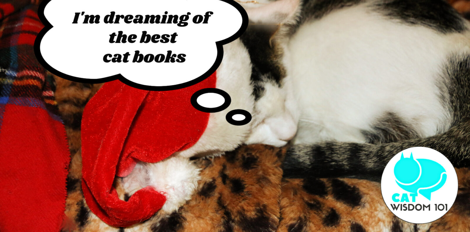 best cat books 2019 2020