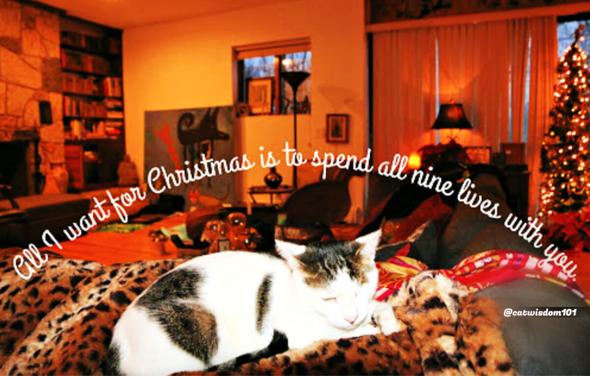 christmas-cat-quote-Odin