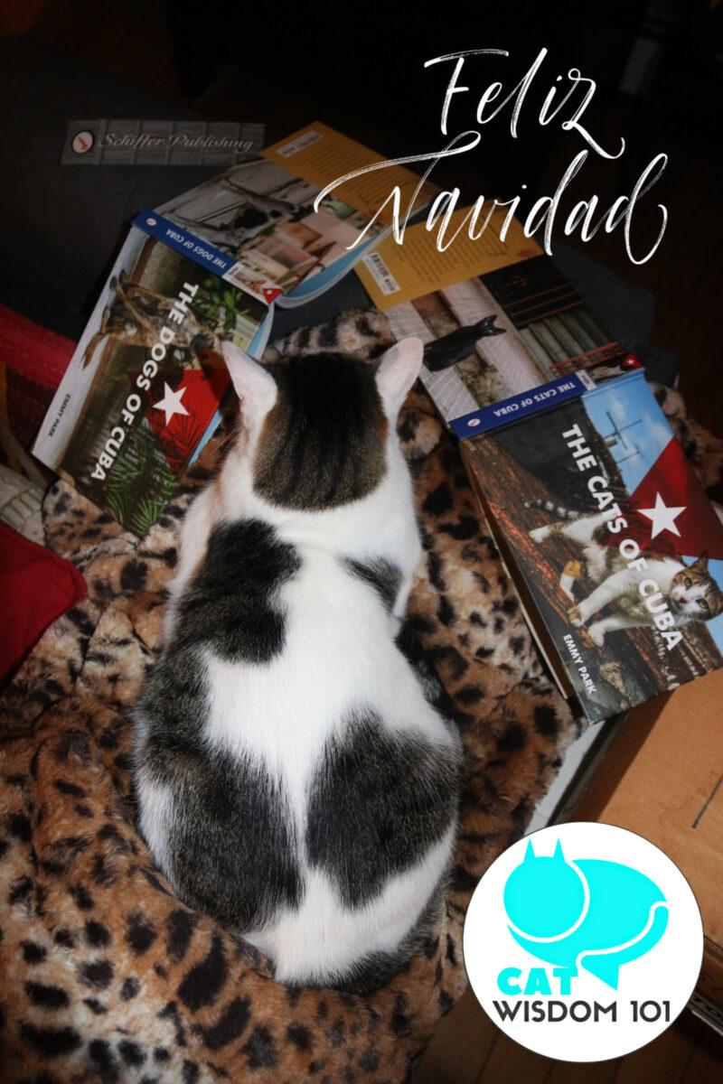 Cats of Cuba Dogs of Cuba book