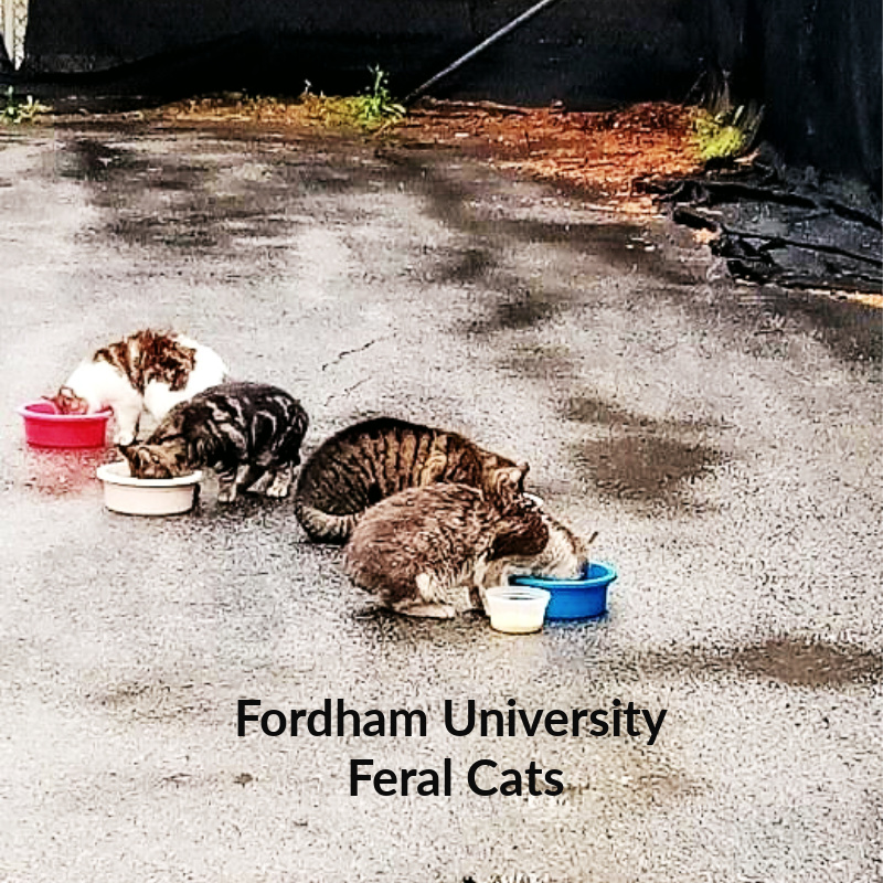 Fordham campus feral cat colony