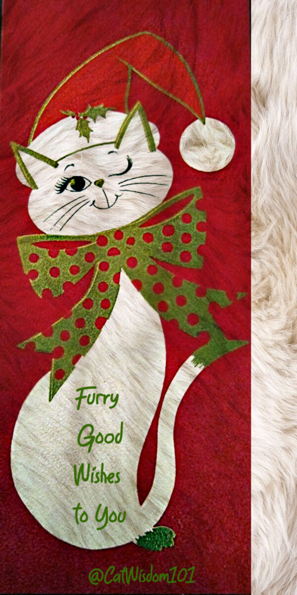 furry christmas cat wishes