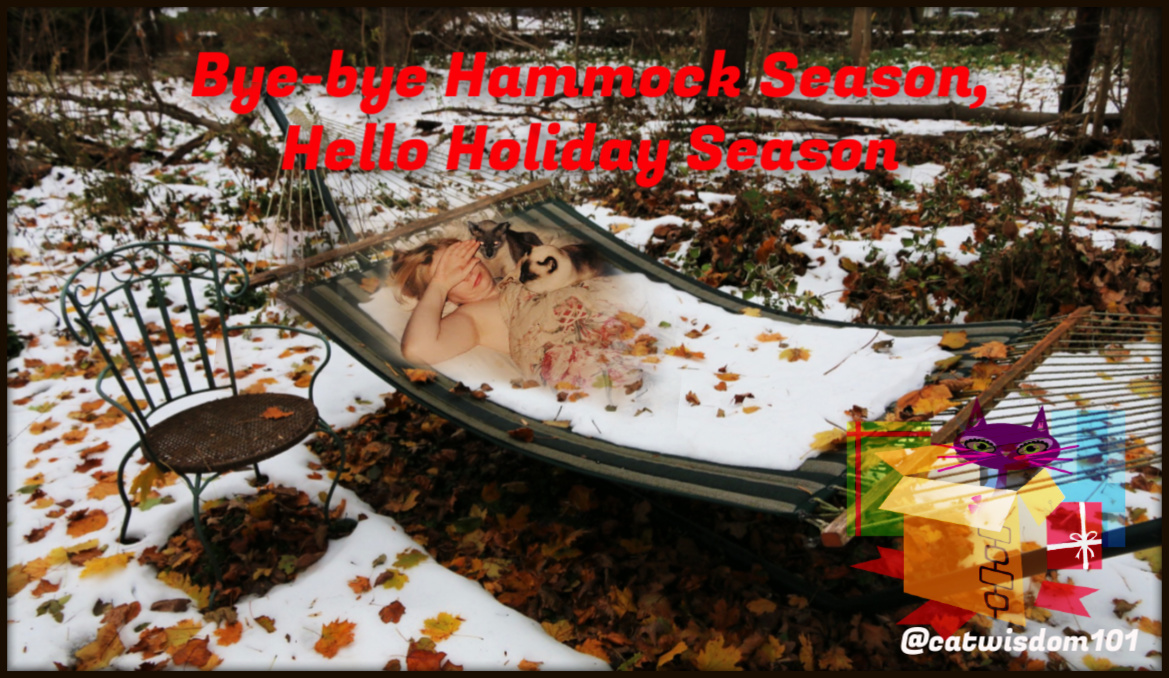 woman lying in hammock with cats Chrsitmas