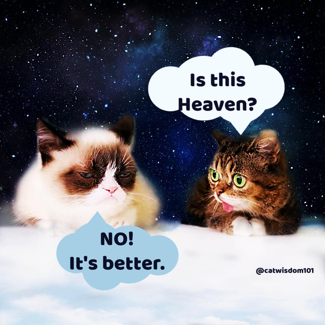 Grumpy Cat Lil Bub in heaven