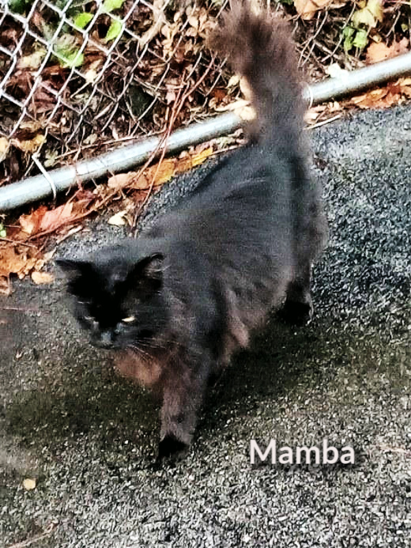 Mamba feral cat in New York campus