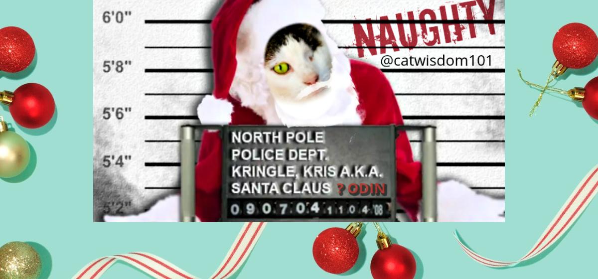 Santa cat naughty mug shot