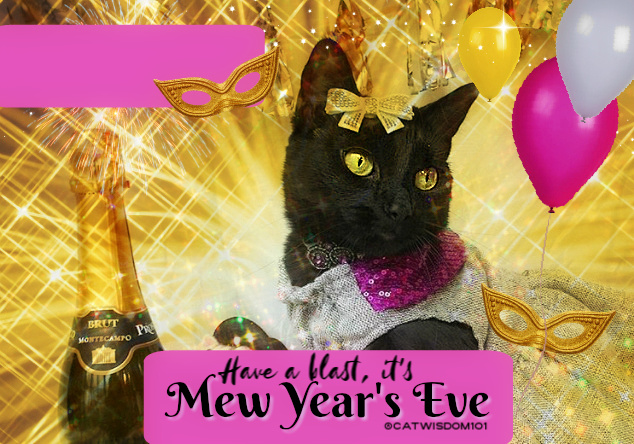 black cat new year party 2020