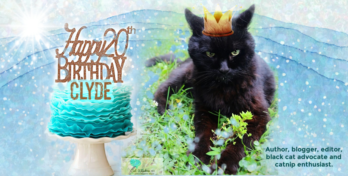 20th cat birthday Cat wisdom 101