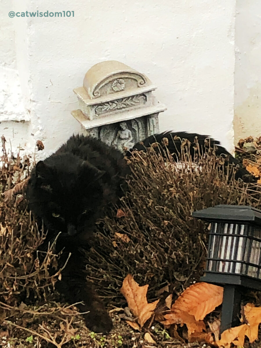black cat Clyde visiting grave