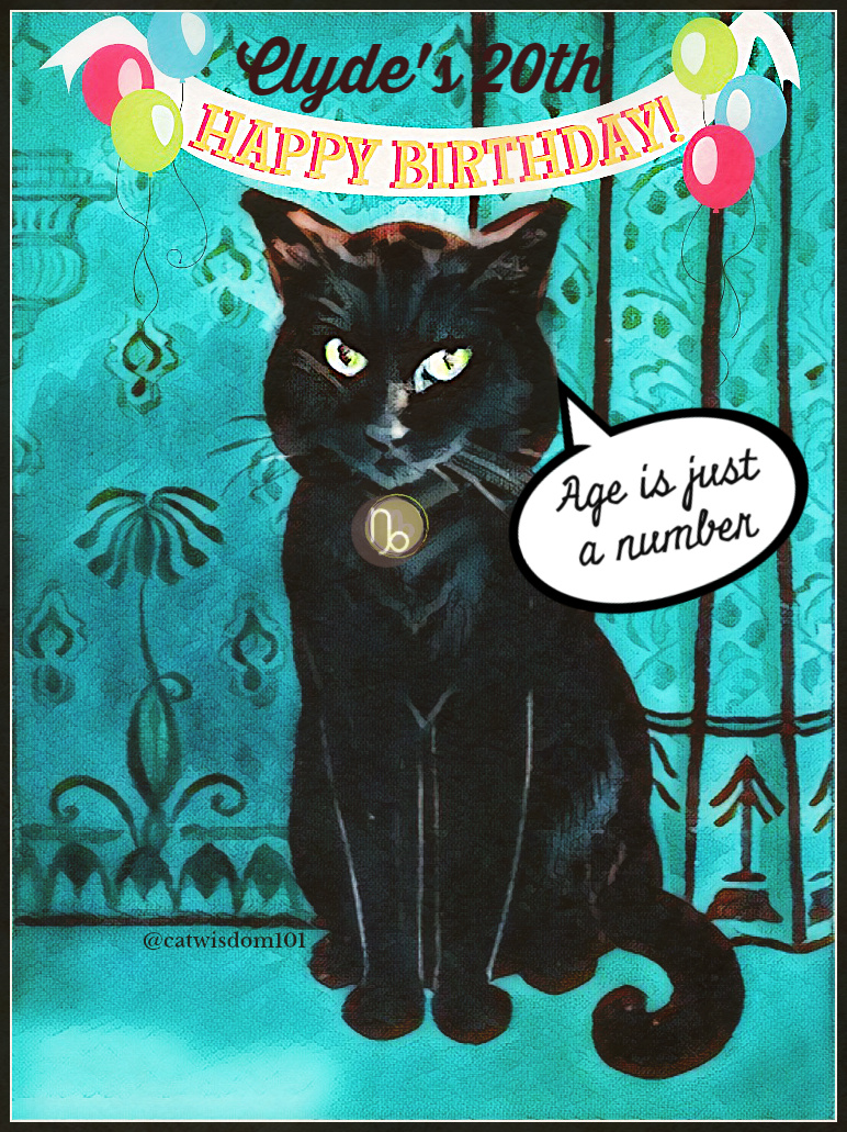 black cat clyde birthday card