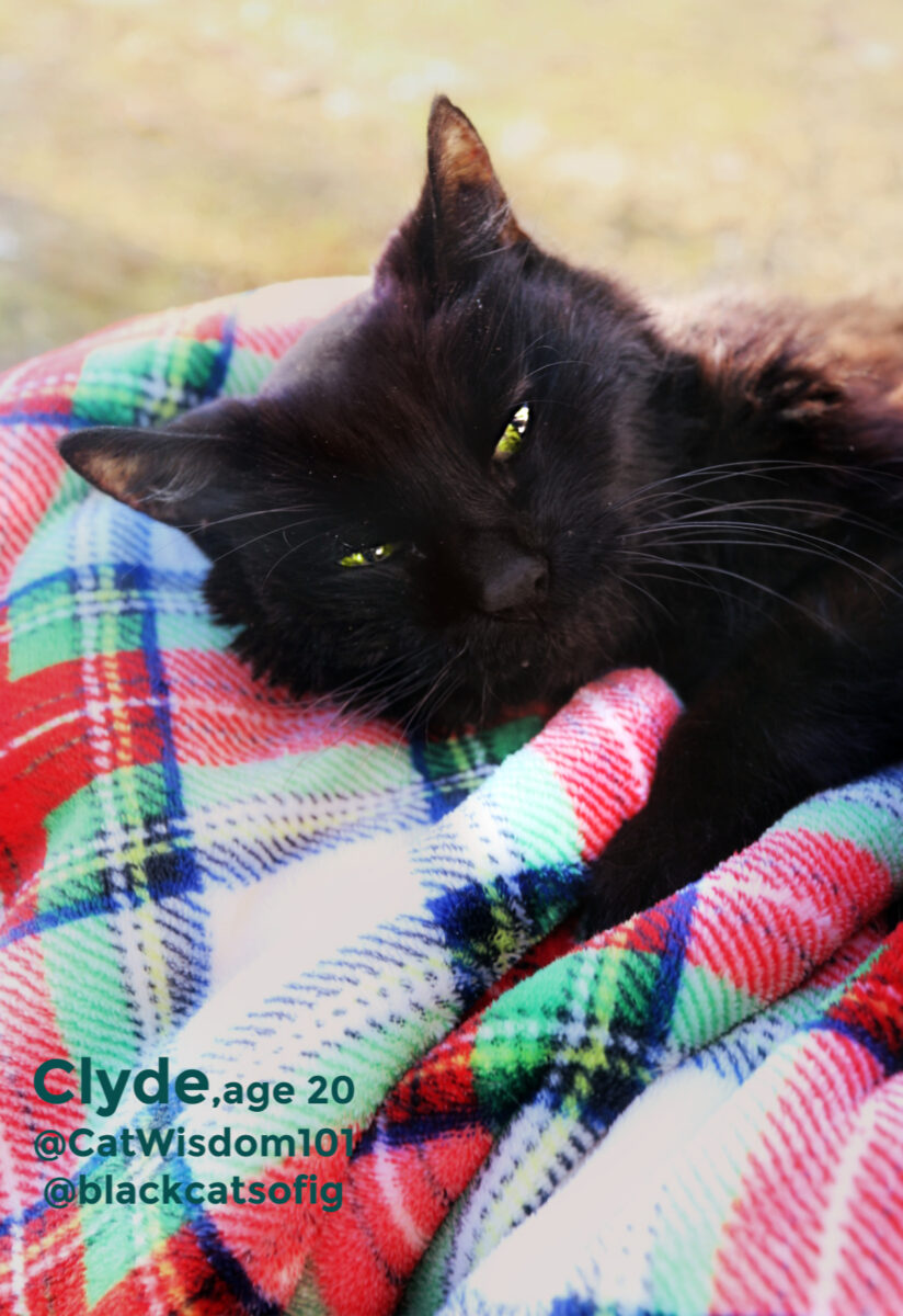 Clyde black cat birthday portrait