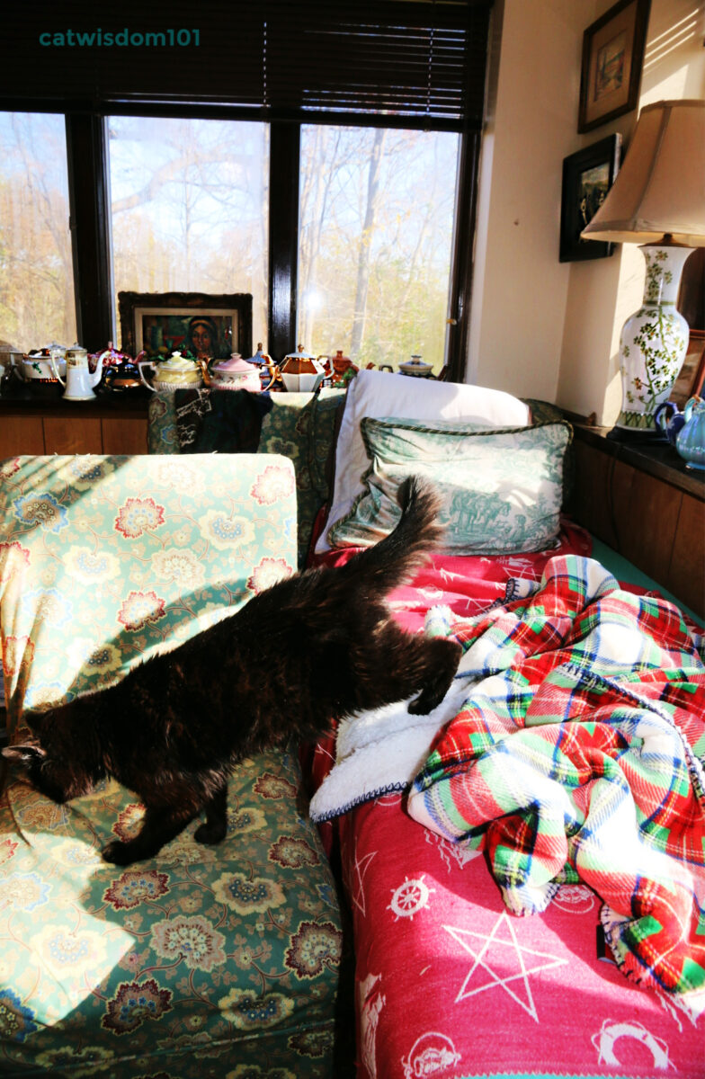 black cat on massage table with teapots