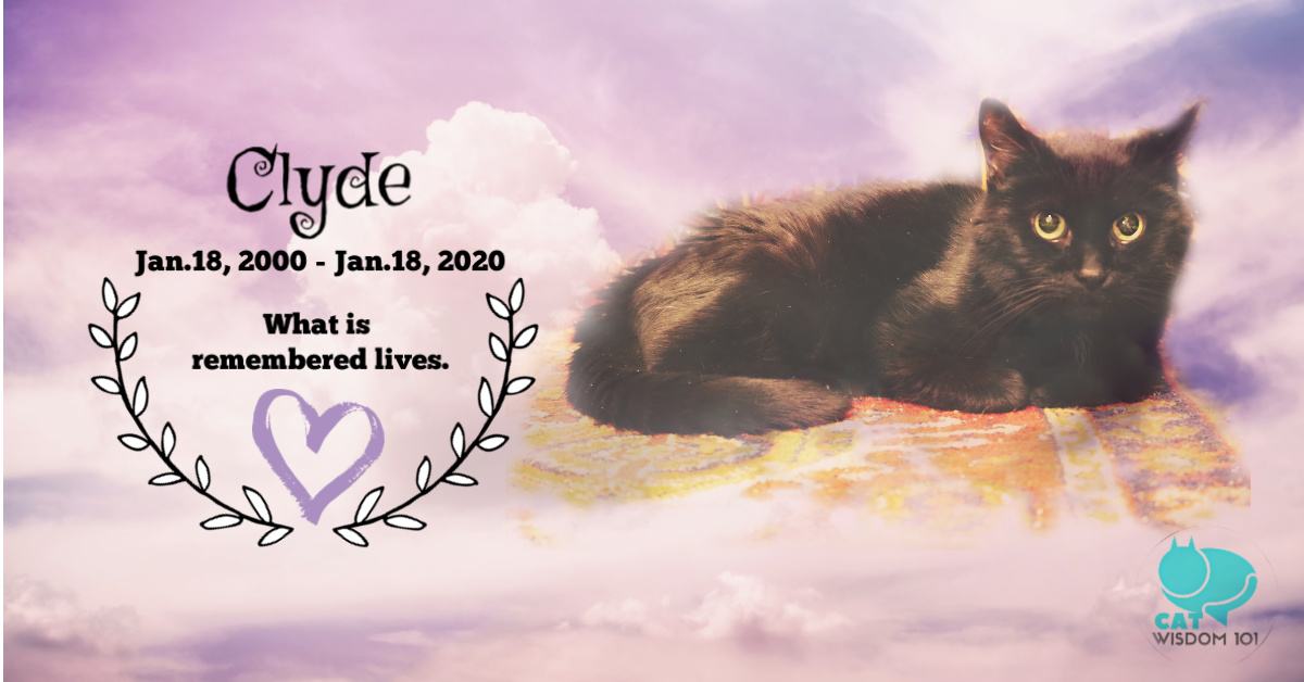 black cat advocate Clyde RIP memorial