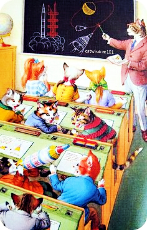 cats in school illustration