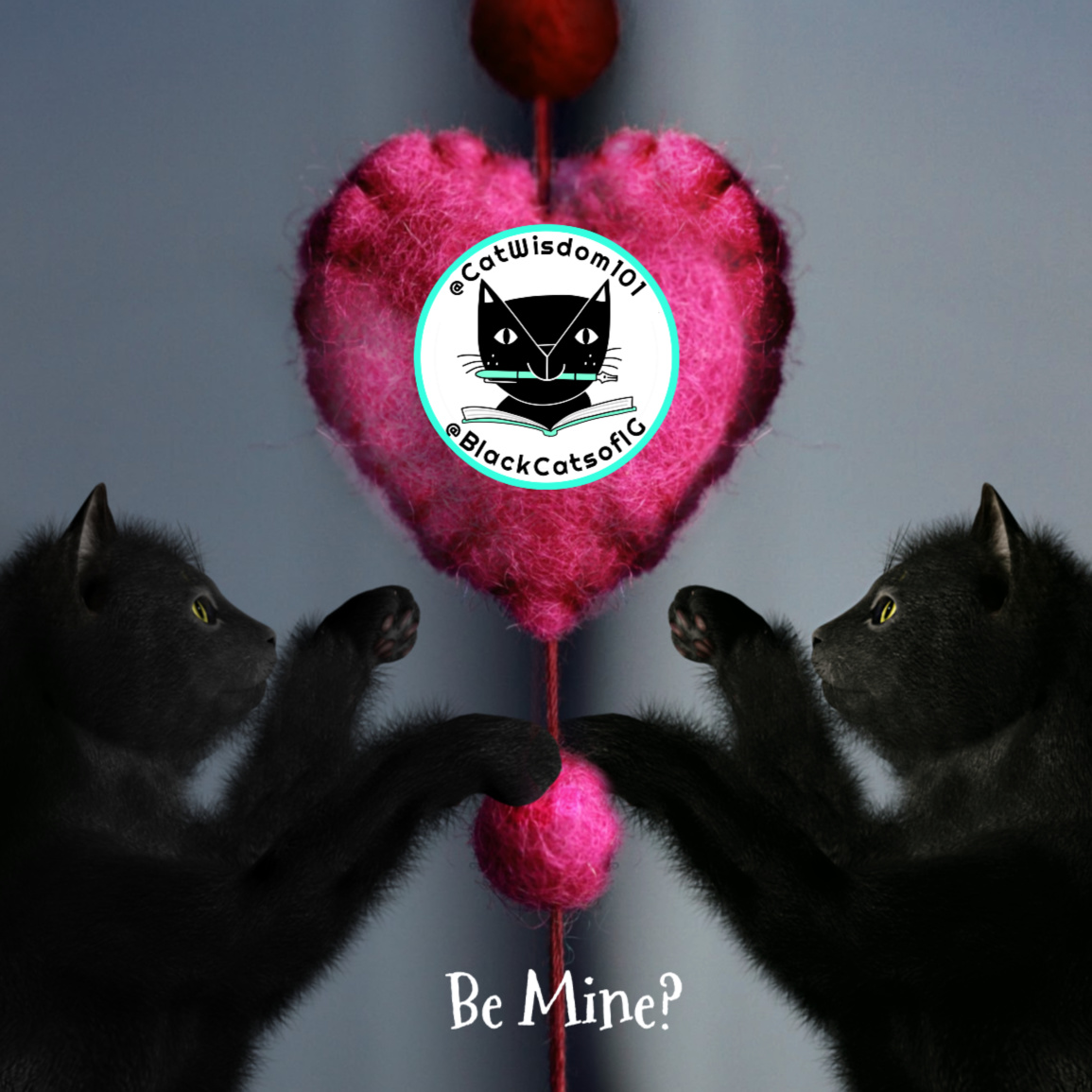 two black kittens with catnip heart toy