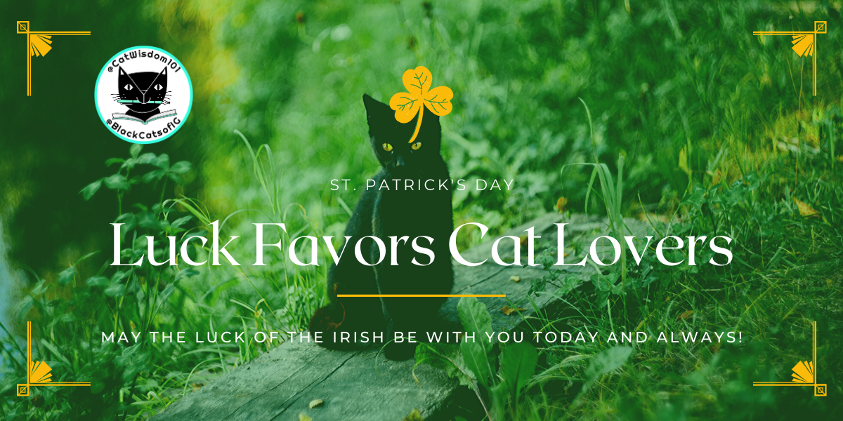 st. patrick's day lucky black cat